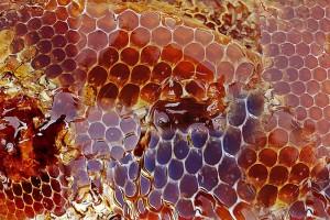 miel de ruche