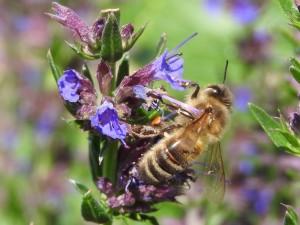 abeille et fleur